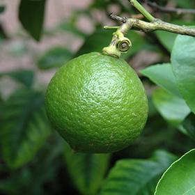 Fruit and Nut Tree Photo