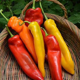 Vegetable Photo